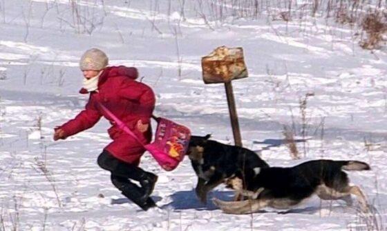 Жительница Тверской области пострадала от укусов собаки