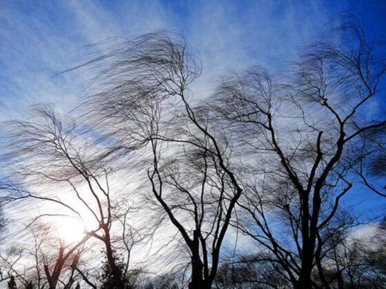 МЧС по Тверской области  предупреждает об усилении ветра 12 марта