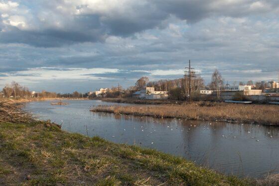 В Твери гнезда чаек могут обойтись в 6 миллионов рублей