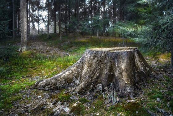 В Тверской области лесозаготовителю простили грехи за примерное поведение