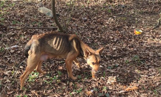 Под Тверью неравнодушные люди ищут истощенную собаку, чтобы ей помочь