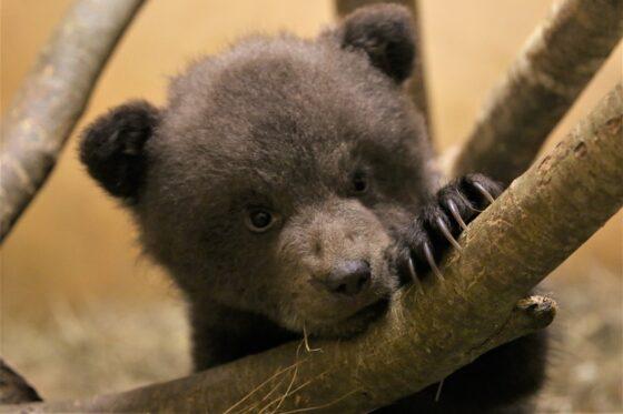 Центр спасения: голосуем за наших медвежат