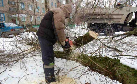 В Твери работника «Зеленстроя» придавило деревом
