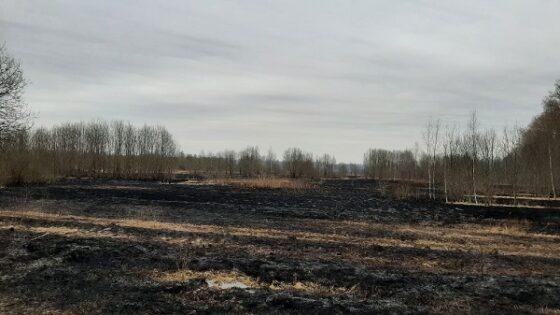 В Тверской области из-за пала травы сгорели 4 хозпостройки