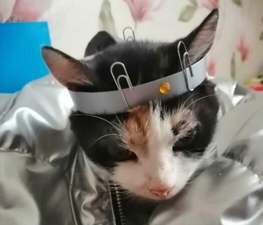 В Оленино домашнюю кошку Мосю нарядили в костюм космонавта