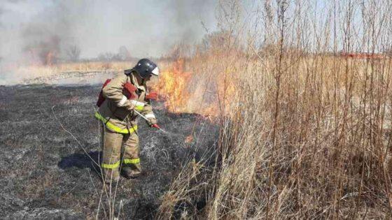 Почти 100 пожаров за сутки произошло в Тверской области из-за сухой травы