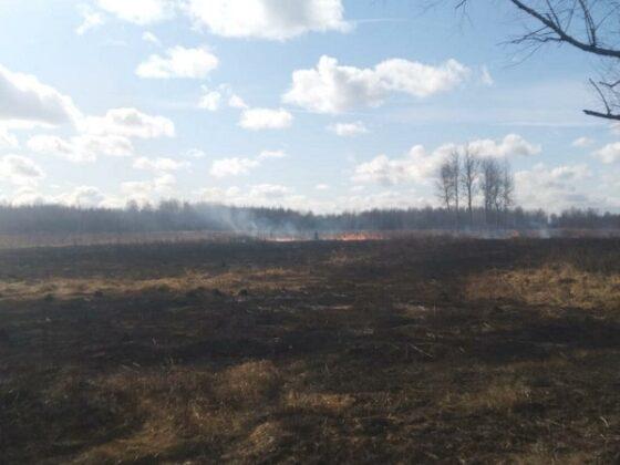 В Тверской области горело поле