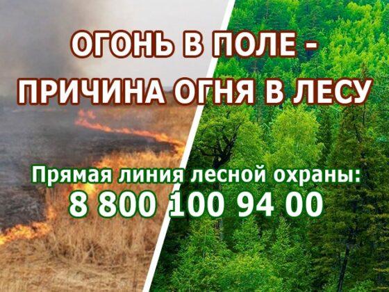Минсельхоз Тверской области напоминает, куда звонить, если загорелся лес