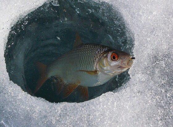В Тверской области браконьера поймали на месте преступления с ледорубом в руках