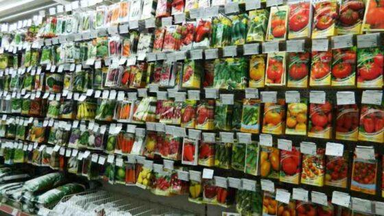В Тверской области продают невсхожие семена