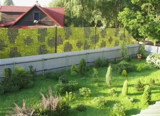 Тень на плетень: как отстоять права, если соседская баня затеняет участок