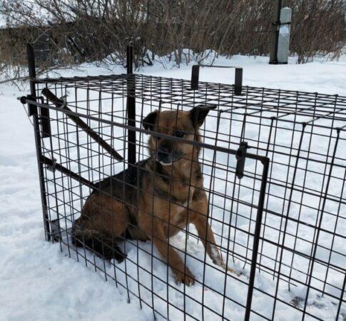 В Твери зоозащитники ищут деньги на покупку собаколовки