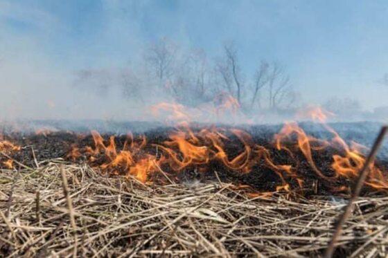 Из-за пала травы под Зубцовом могли сгореть деревенские дома