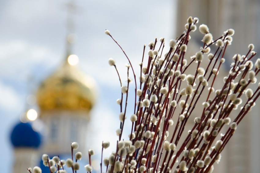 Накануне Вербного: где растет верба и почем ее можно купить в Тверской области