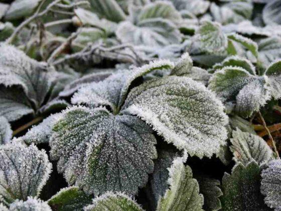 К выходным в Тверской области прогнозируют заморозки