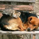 Спасите Шарика: есть ли право на жизнь у бездомных животных?