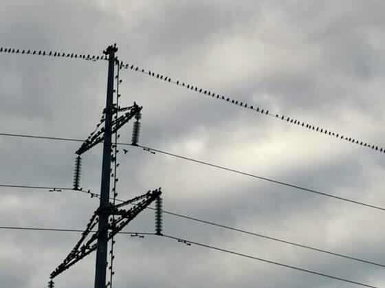 Волонтеры будут обследовать ЛЭП в Тверской области, чтобы спасти птиц