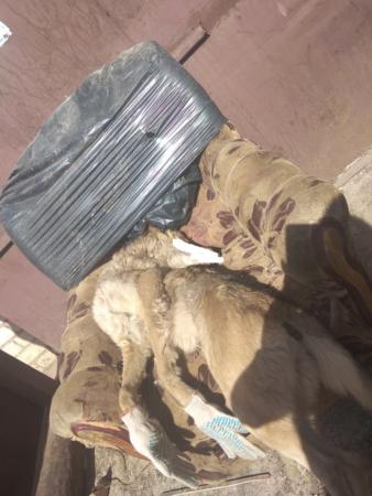 В Тверской области живодеры замучили собаку до смерти