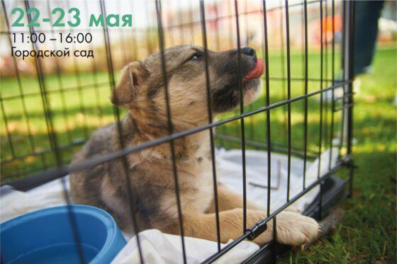 В Твери на Площади Добра будут раздавать бездомных животных