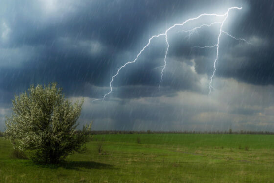 МЧС предупреждает о грозе и сильном ветре в Тверской области
