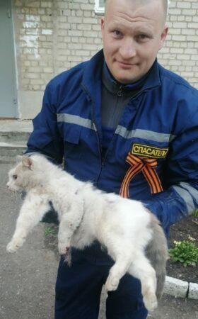 Житель Ржева чуть не уехал с котом под капотом