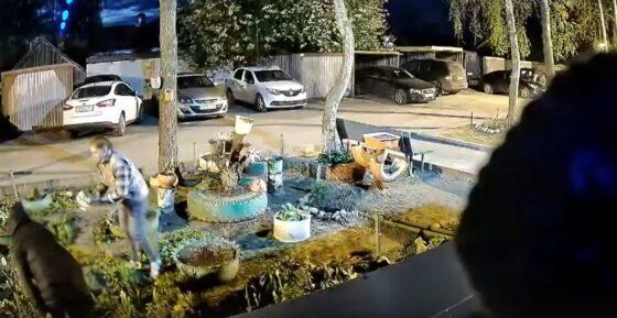 В  Кимрах две женщины прямо на камеру  украли  цветы с дворовой  клумбы