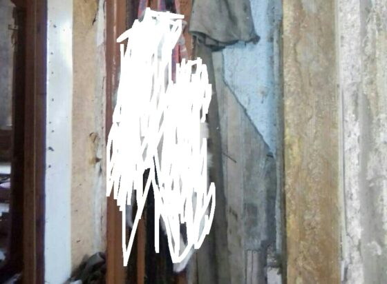 Еще один кошачий концлагерь нашли в заброшенном доме в Тверской области