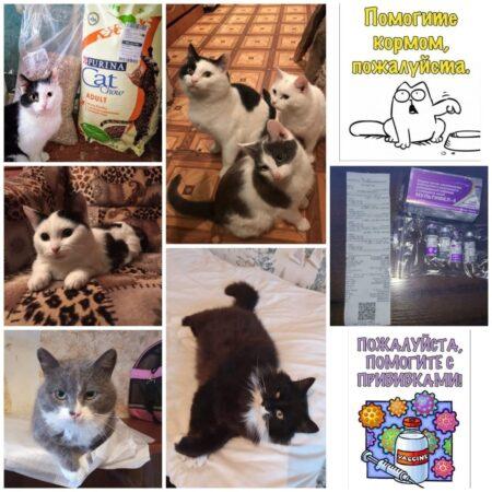 В Тверской области  зоозащитники спасают шесть кошек от живодера