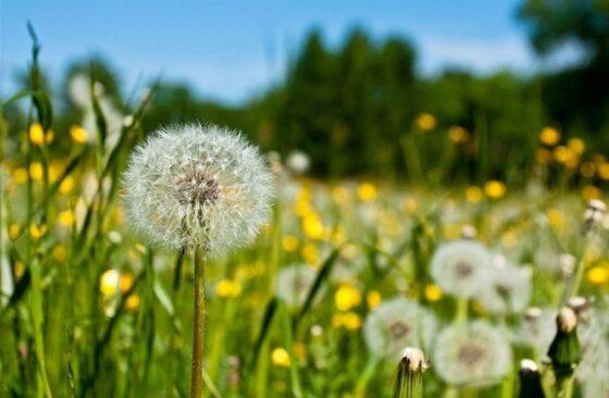 Синоптик рассказал, когда в Тверскую область придет настоящее лето