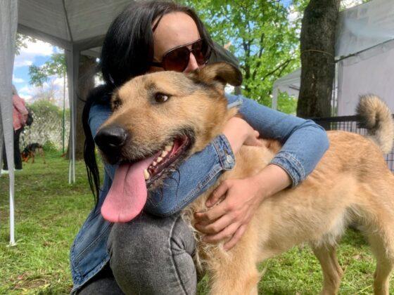 В Твери на площади Добра зооволонтеры нашли хозяев для трех щенков, одной собаки и четырех котов