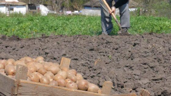 В Тверской области с начала года подорожали картофель, алкоголь и ритуальные услуги