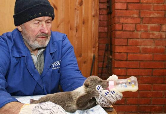На рыбалке в Торопце утонул медвежий папа Валентин Пажетнов