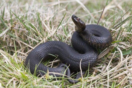 Если ребенка укусила змея: советы тверских врачей