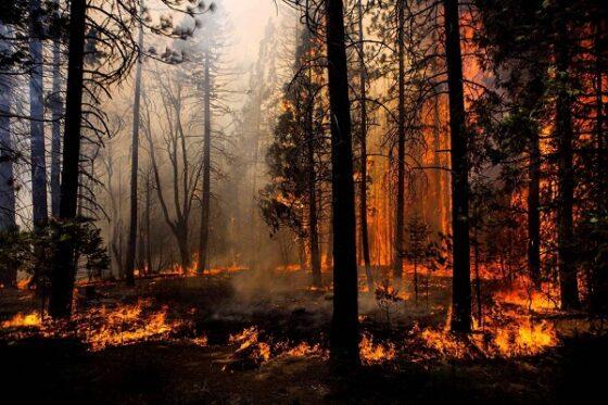 Жителей Тверской области предупреждают о высокой пожарной опасности в выходные
