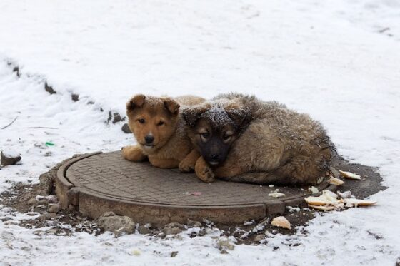 ВКонтакте говорит бездомным животным: нет
