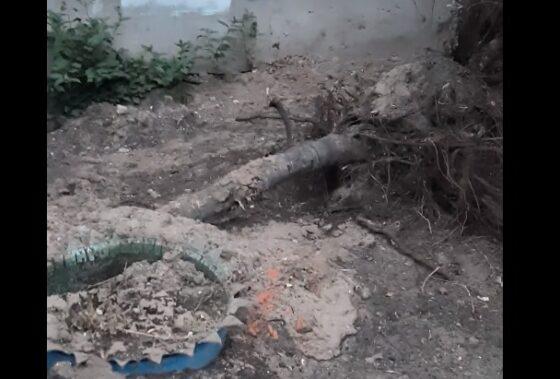 В Твери коммунальщики уничтожили клумбы и выдрали деревья у многоквартирного дома