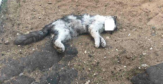 Стая черных собак загрызла шесть котов в Твери