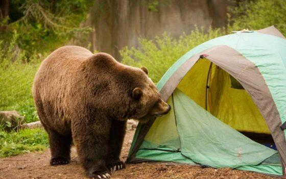 В Тверской области создадут палаточный лагерь для туристов