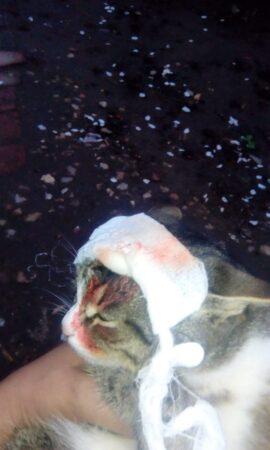 В Торжке догхантеры стреляют в котов  из пневматического оружия