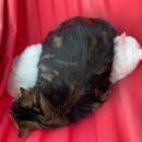 В Тверской области коты, которых запихали в мешок и бросили умирать в лесу, нашли дом