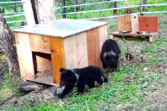 Семья Пажетновых из Тверской области помогла обустроить центр для медвежат-сирот