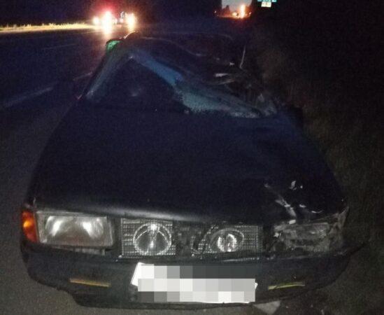 В Тверской области водитель получил травмы, сбив лося