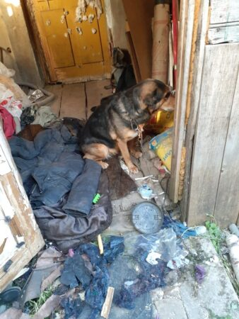 В Ржеве хозяева измучили собаку, посадив на короткую цепь без еды и воды