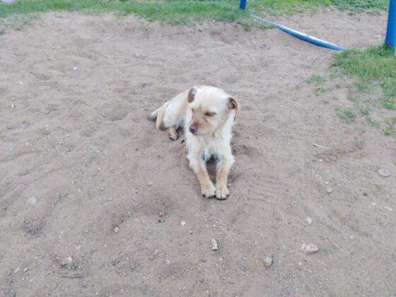 Собаке было не больно: полиция не увидела факт жестокого обращения с животным
