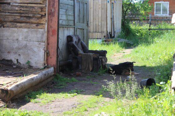 В Тверской области  стая диких псов разорвала сторожевую  собаку