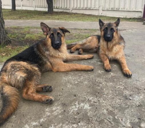 В Тверской области полицейские помогли хозяевам найти любимых собак