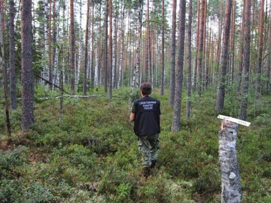 В Тверской области в лесу нашли скелет человека