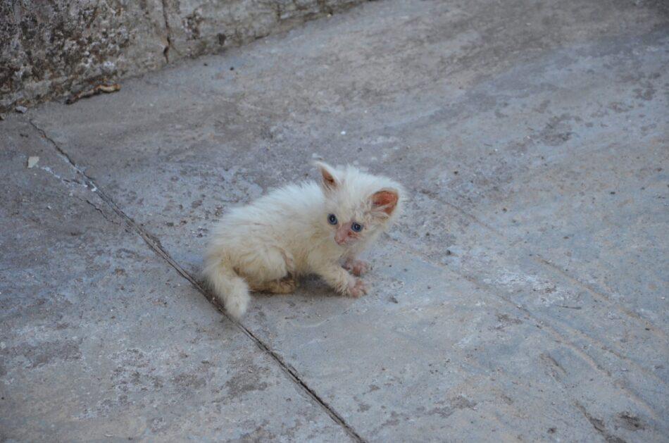 В Тверской области монахиням  подбросили котенка