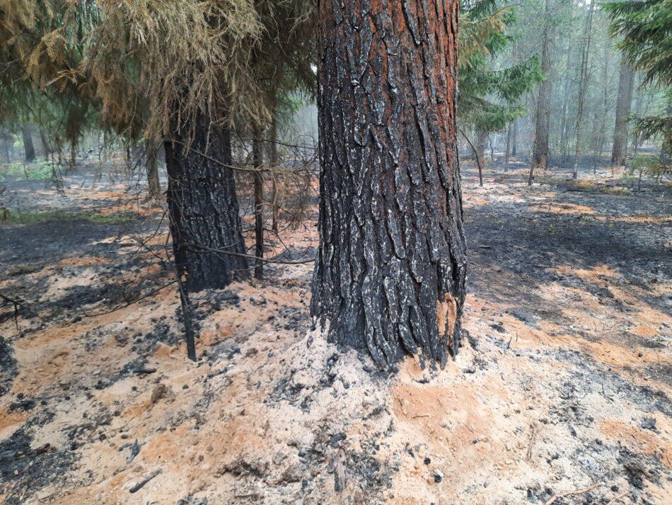 Жители тверской деревни два часа тушили лес до приезда пожарных