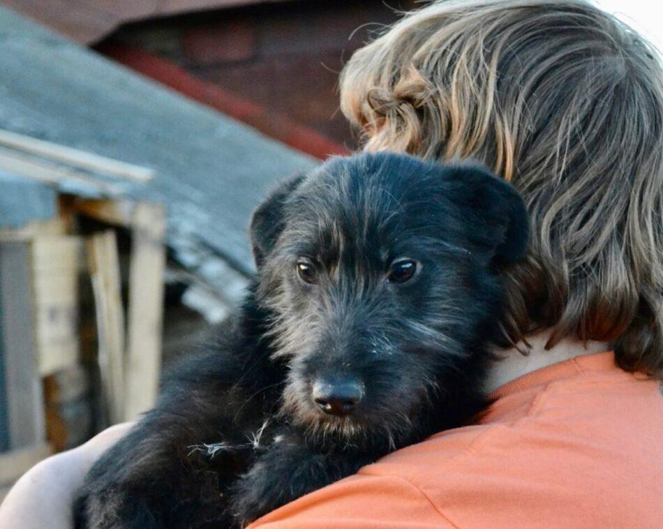 400 собак и 50 кошек могут оказаться на улице в Тверской области